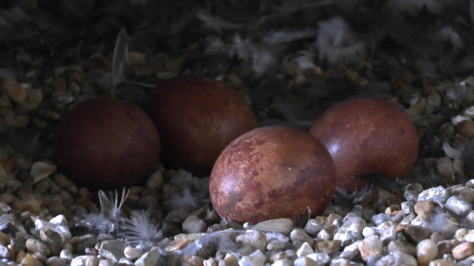 4 Eier für Webseite 2015
