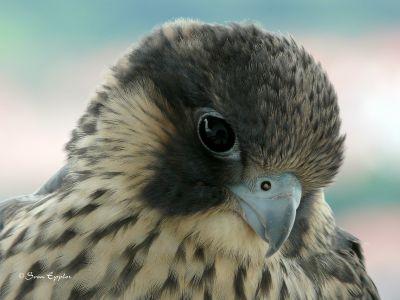 Verträumter Blick vom Nesthäkchen